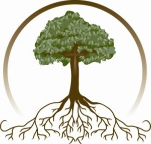 tree-roots-300x28715[1]